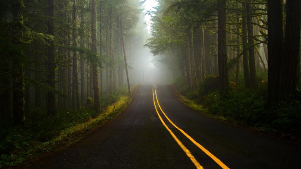 Dark forest road wallpaper