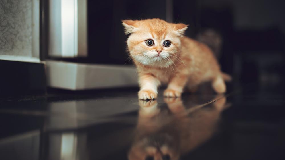 Cute Cat Walking on a Table wallpaper