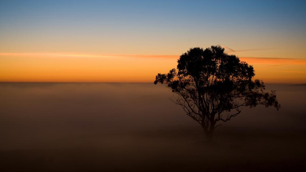 Foggy sunset photography wallpaper
