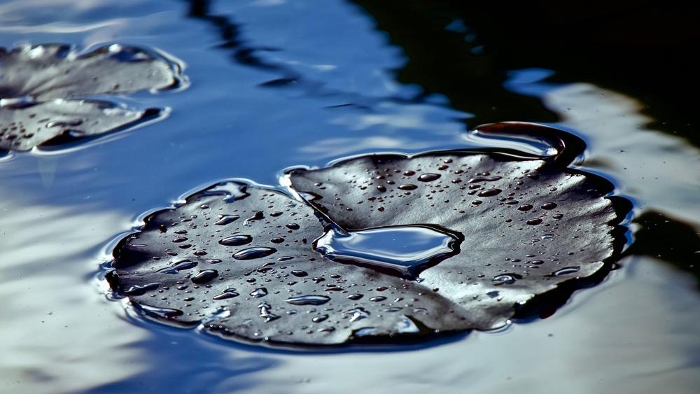 Wet Lily pad wallpaper