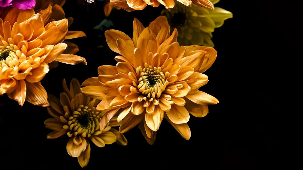Orange flowers on black background wallpaper