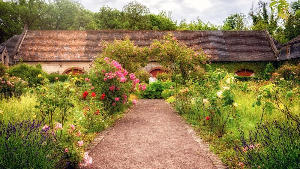 Garden Roses in the backyard wallpaper