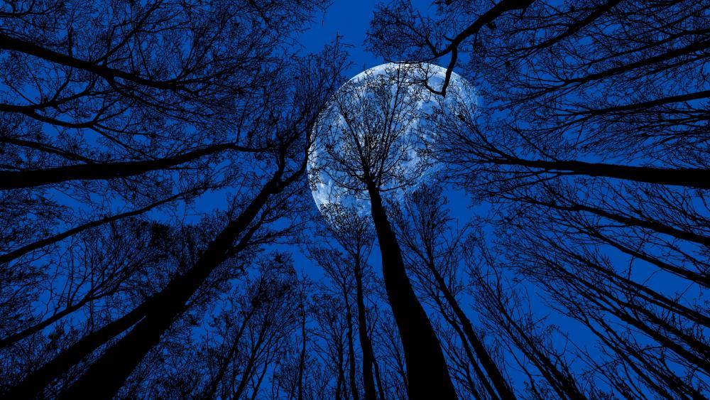 Full Moon In The Trees wallpaper