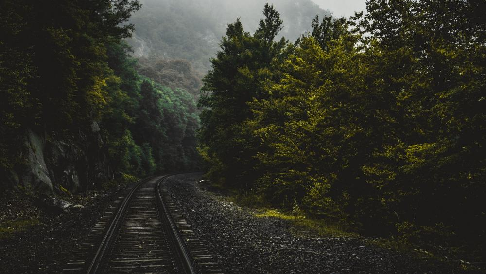 Railway Forest Trees wallpaper