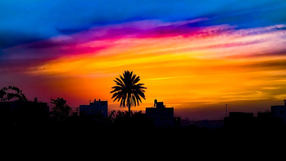 Palm tree silhouette wallpaper