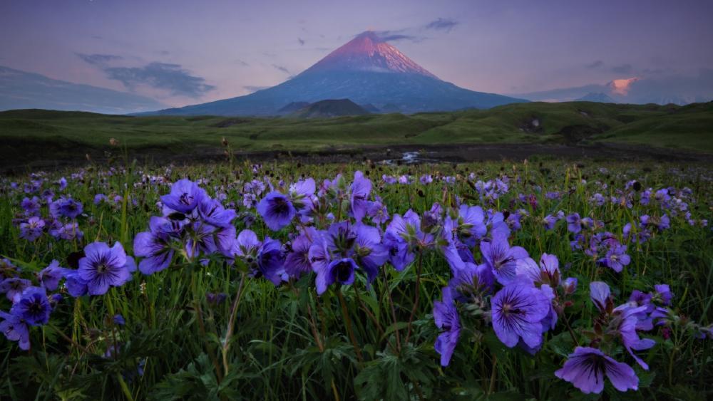 Mt. Fuji from Ubuyagasaki wallpaper