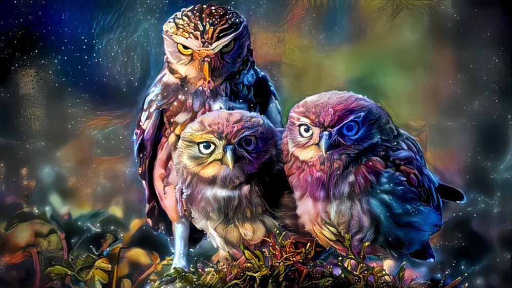 Fantasy owls wallpaper