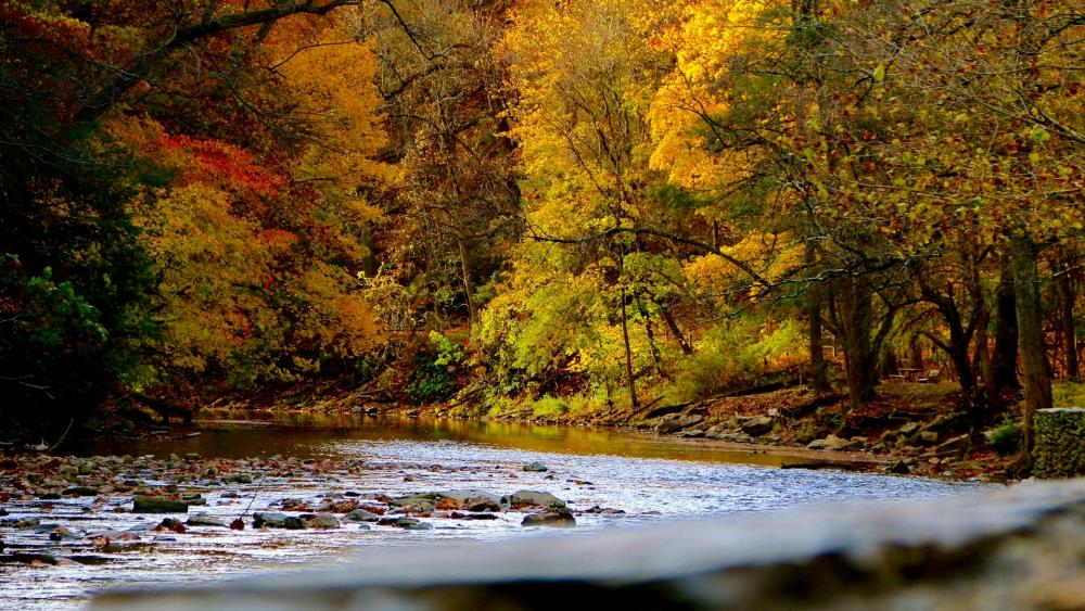 River in an a fall forest wallpaper