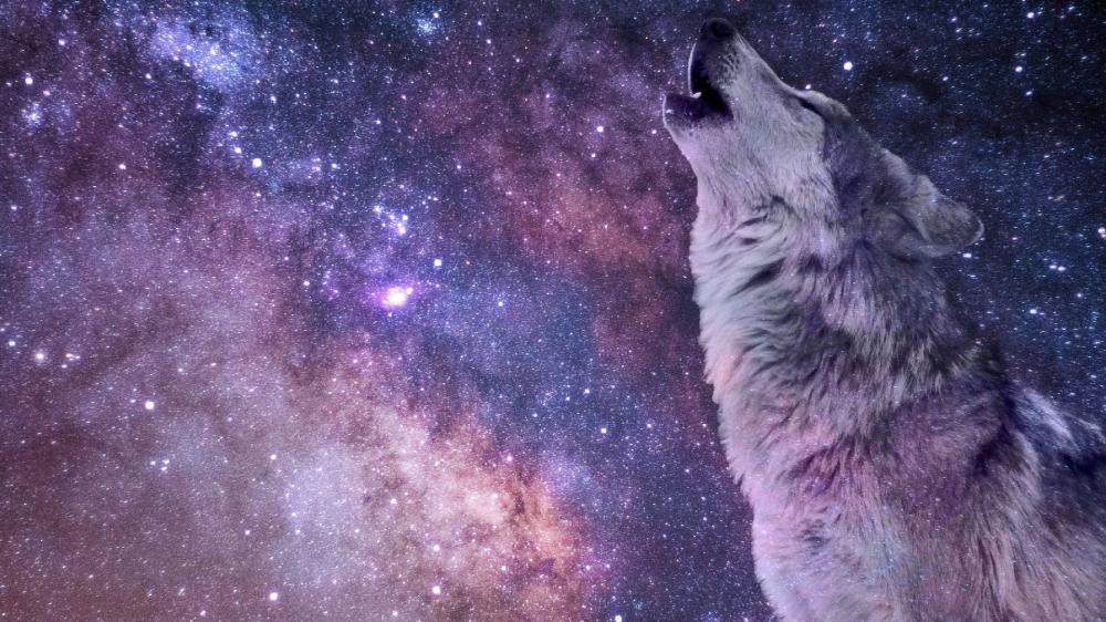 Wolf Howling wallpaper