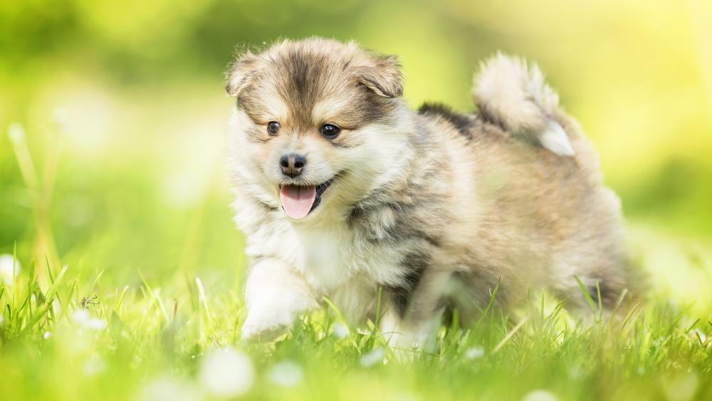 Happy puppy wallpaper