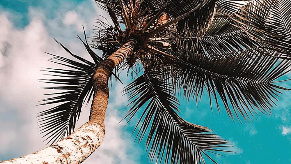 Palm tree low angle view wallpaper