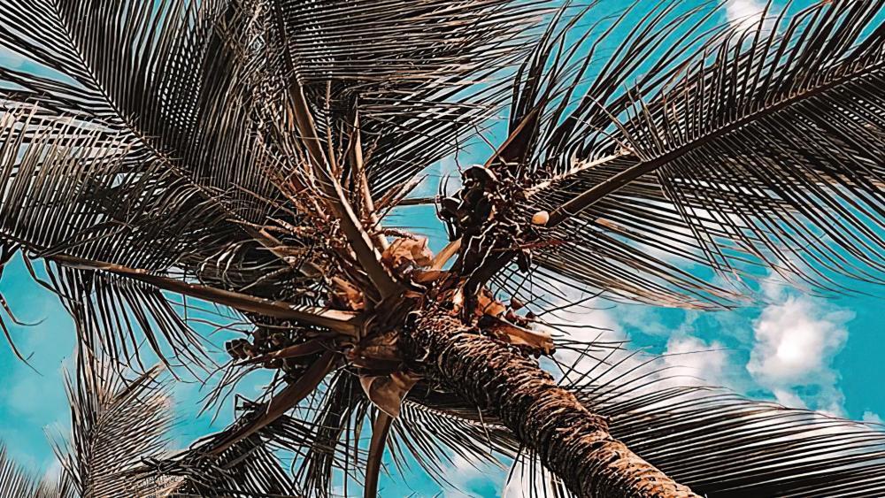 Palm tree worm view wallpaper