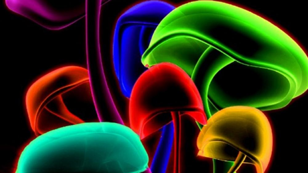 Neon glowing mushrooms wallpaper