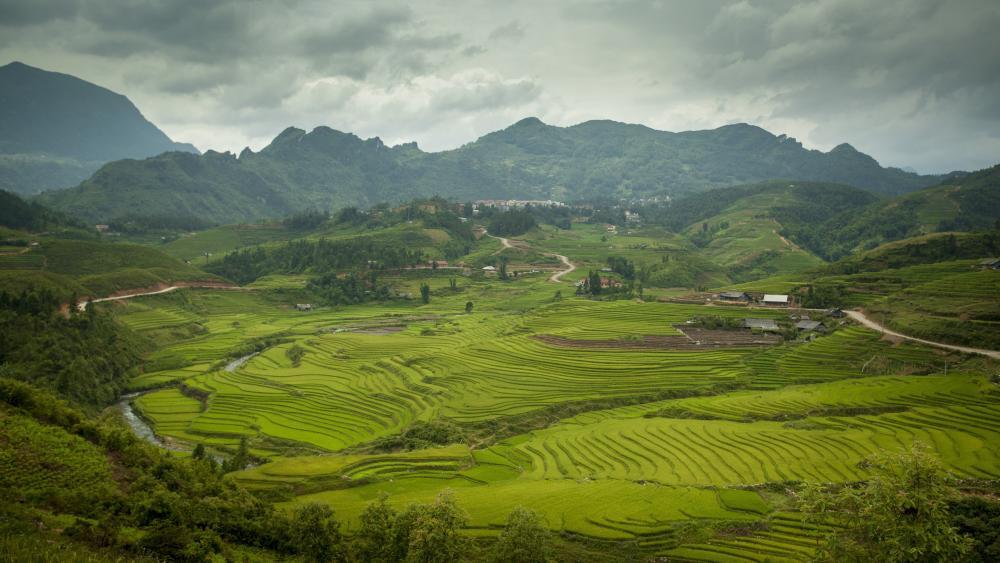 Sapa rice paddies wallpaper