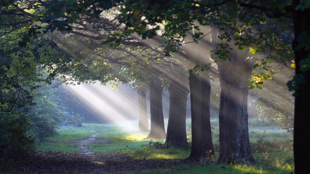 Forest path under the sunbeams wallpaper