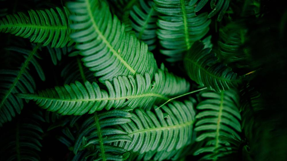 Fern leaves wallpaper