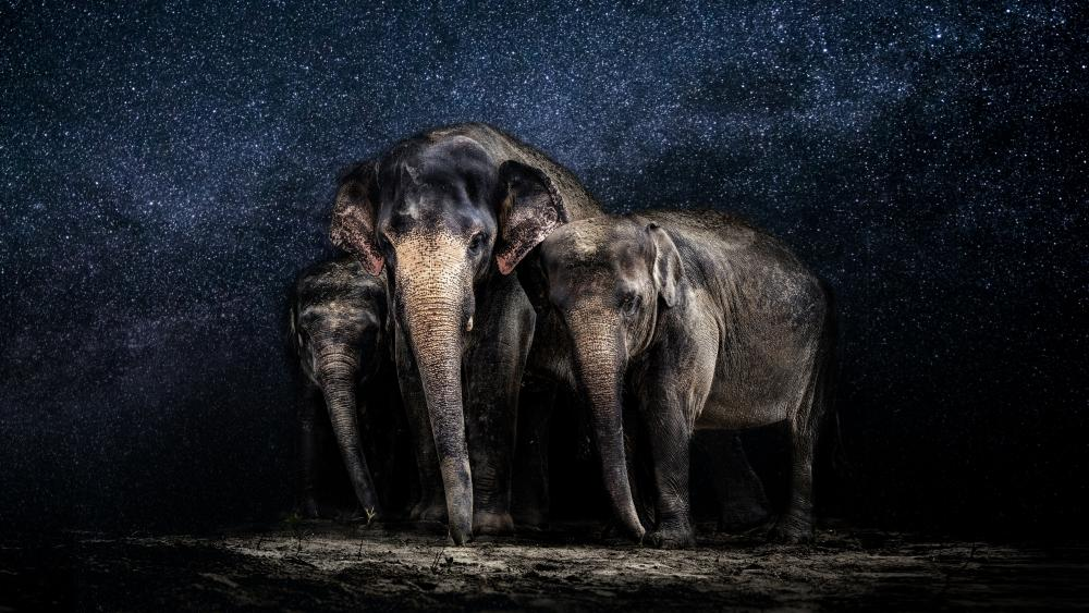 Elephants under the starry sky wallpaper
