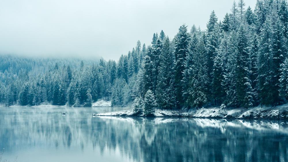 Hoary lakeshore pine forest wallpaper