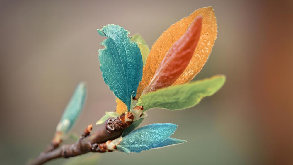 Colorful Leaves wallpaper