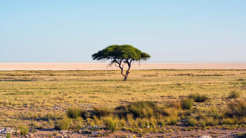 Etosha National Park wallpaper