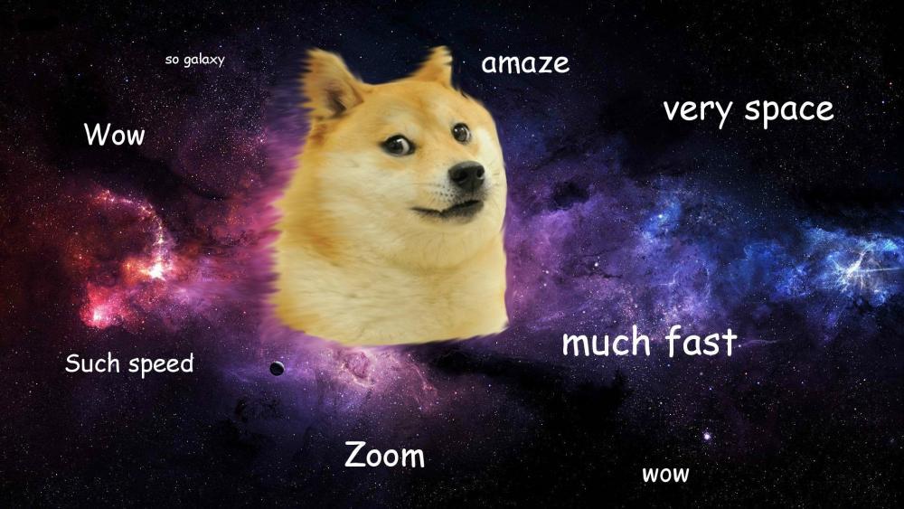 meme  dog wallpaper