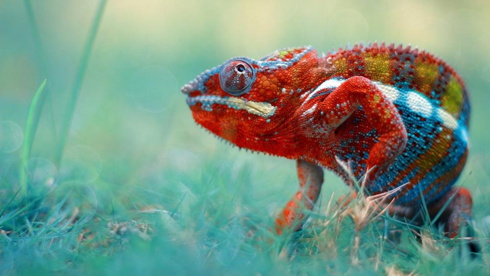 Colorful chameleon wallpaper
