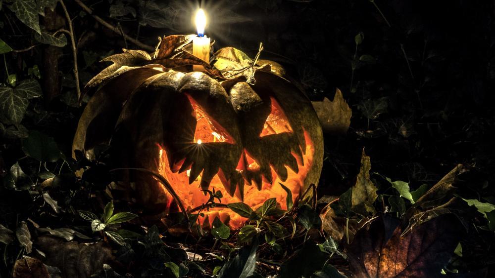 Trick or Treat Halloween Decoration wallpaper