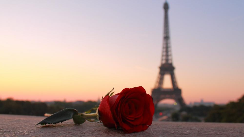 Red rose and Eiffel Tower wallpaper