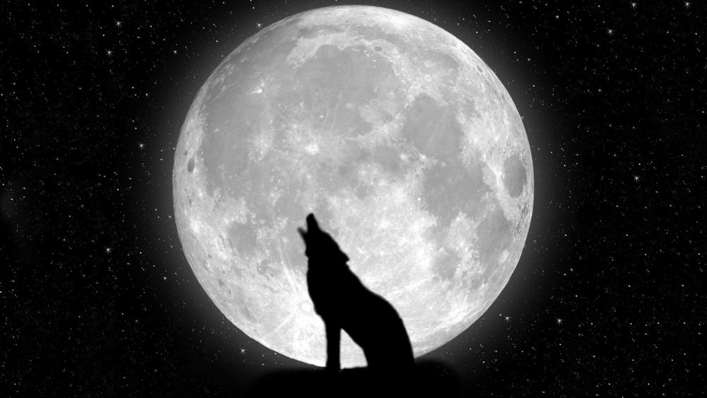 Wolf howling at the moon wallpaper