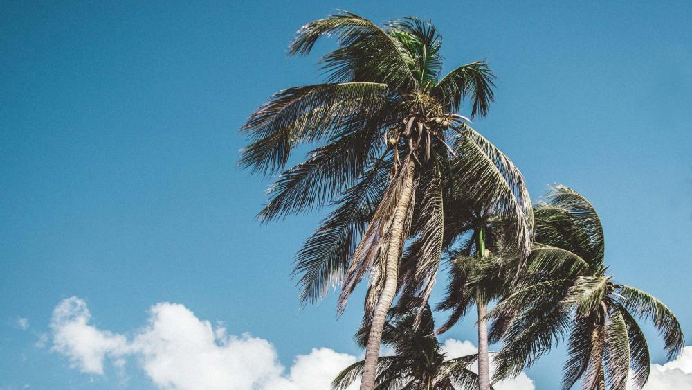 Beautiful beach of Trinidad a city on the island of Cuba wallpaper