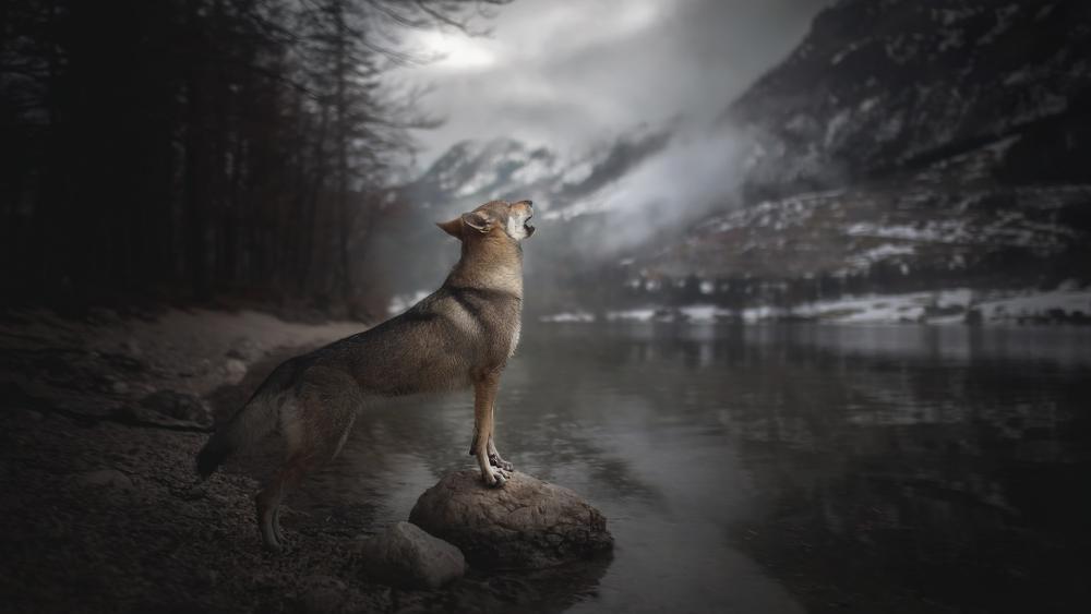 Howling dog wallpaper