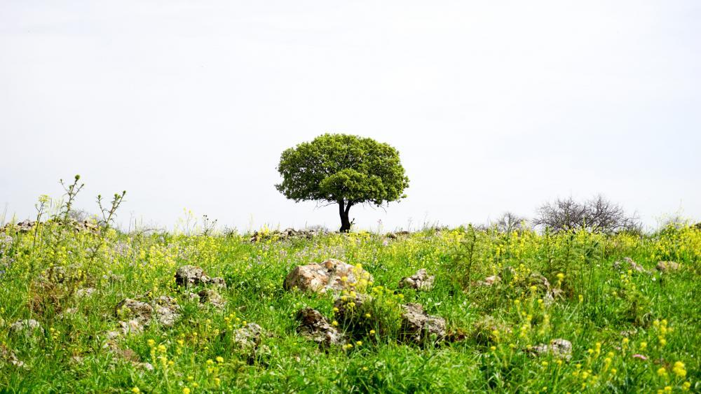 Tree alone wallpaper