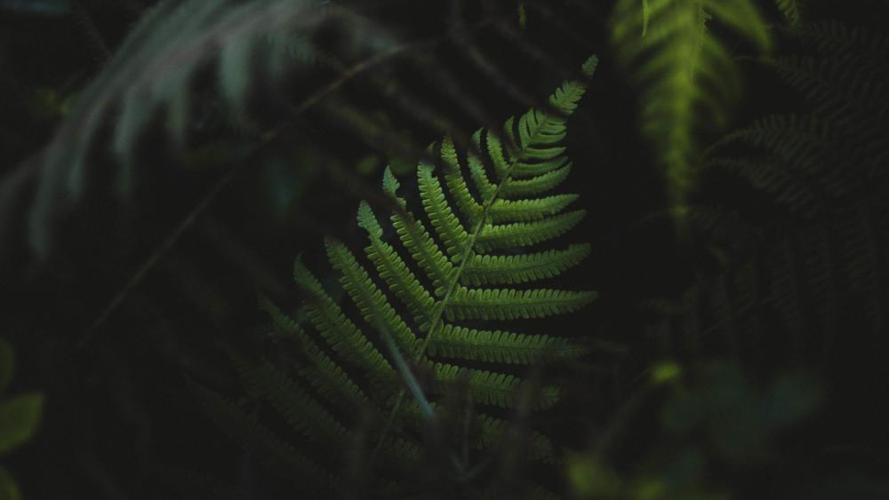 Leaves of dark wallpaper