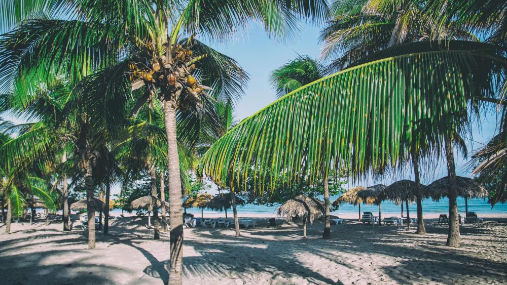 A perfect Caribbean beach with palm trees in Varadero, Cuba wallpaper