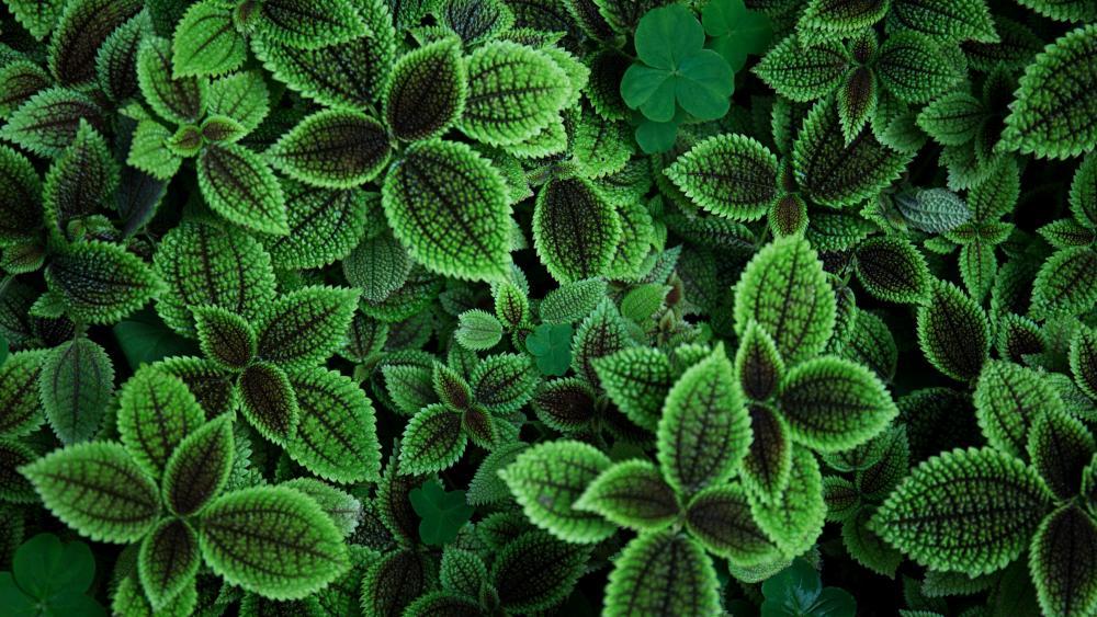 Nettle and clover wallpaper