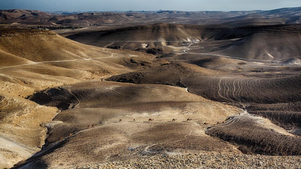 Negev Desert wallpaper