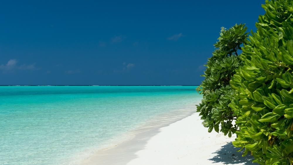 Turquoise waters of Maldives wallpaper