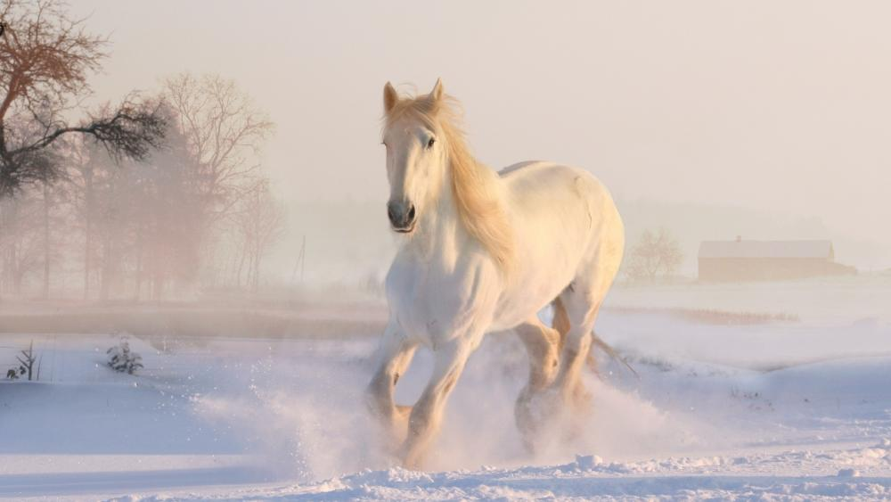 White horse in the snow wallpaper