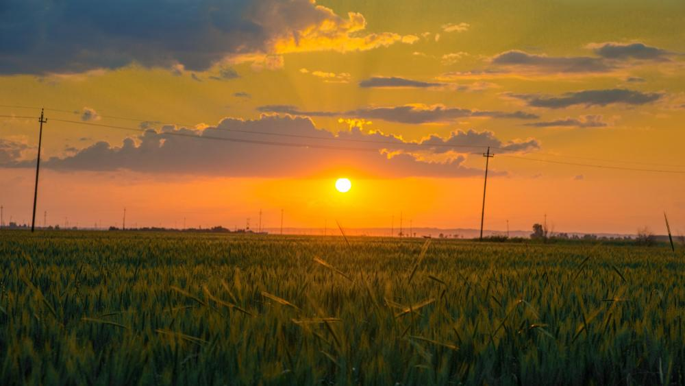 Sunset field wallpaper