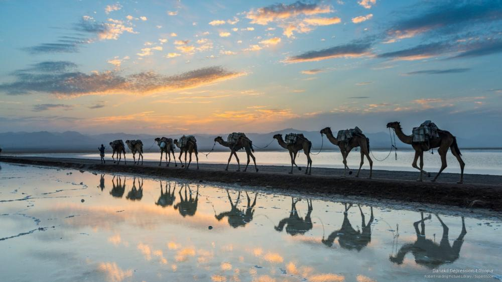 Camel caravan reflection (Danakil Depression, Ethiopia) wallpaper