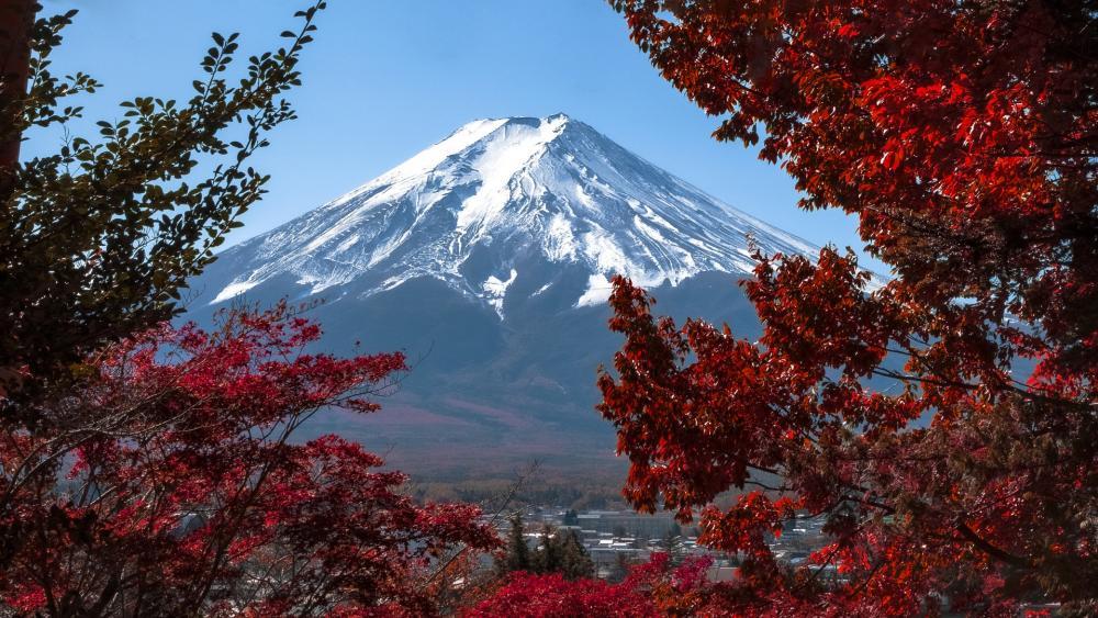 Mt. Fuji from Kawaguchiko Tenjozan Park wallpaper