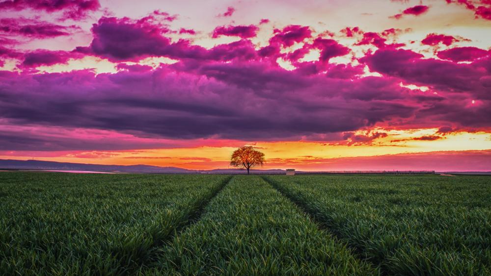 Purple clouds above green field wallpaper