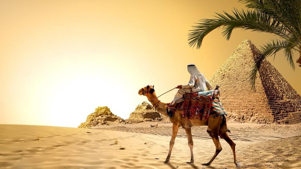 Camel at the Great Pyramid of Giza wallpaper