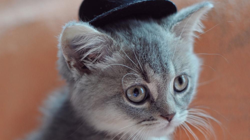 Cat in hat wallpaper