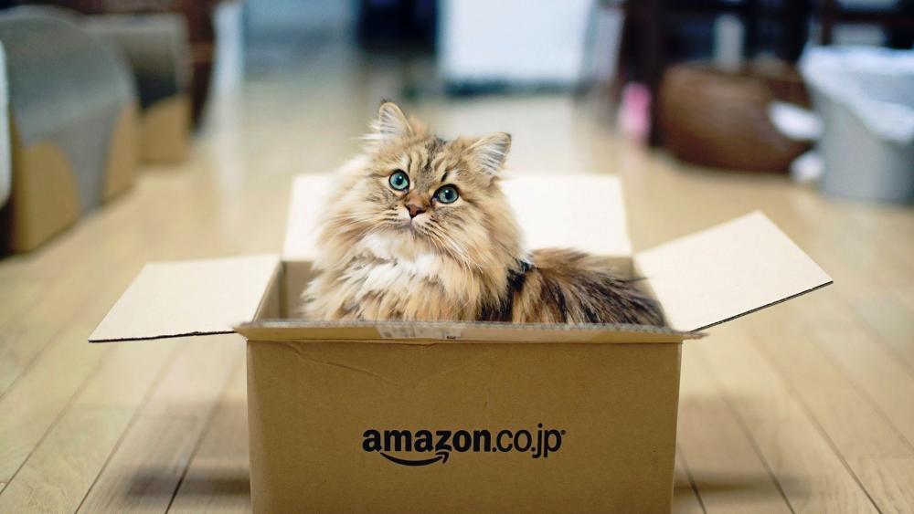 Cat in the box wallpaper