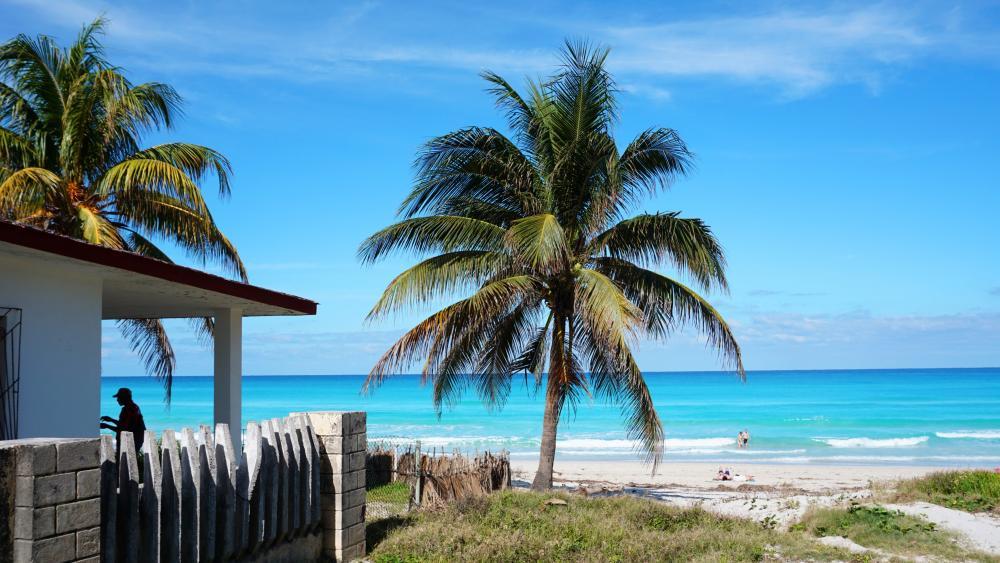 Coconut tree on seashore wallpaper