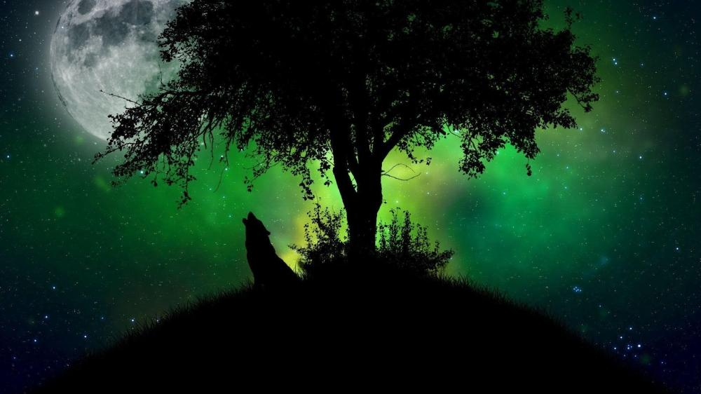 Full Moon Wolf Howling at Midnight wallpaper