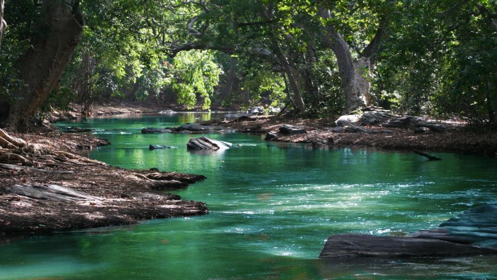 Body Of Water Among Green Leafy Trees wallpaper