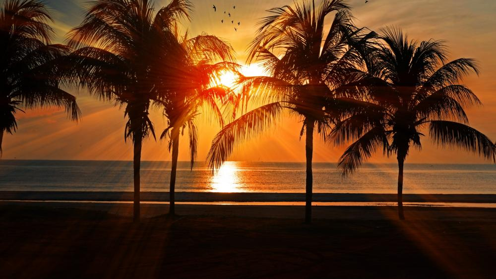 Silhouette Of Palm Trees During Golden Hour wallpaper