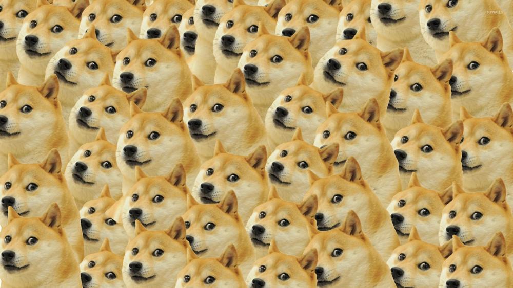 Dog meme wallpaper